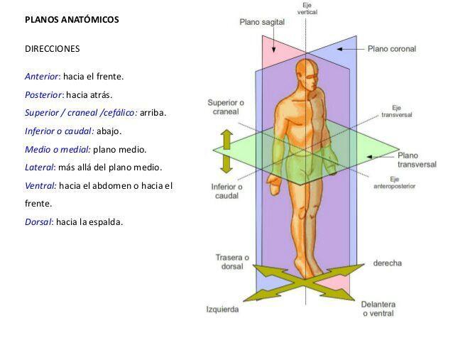Referencias anatómicas | Anatomía Y Biología(medicina) Amino