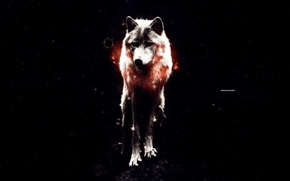 Informacion y Datos curiosos sobre los lobos | •Chic@s Lobo Amino• Amino