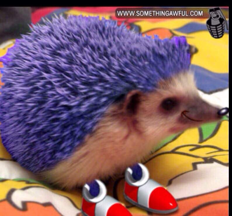 It S Sonic In Real Life Sonic The Hedgehog Amino
