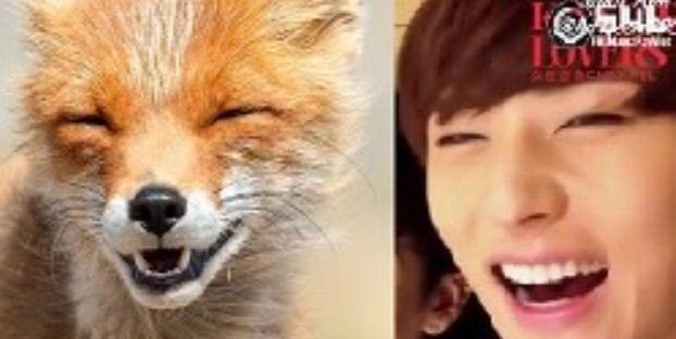 minhyun fox
