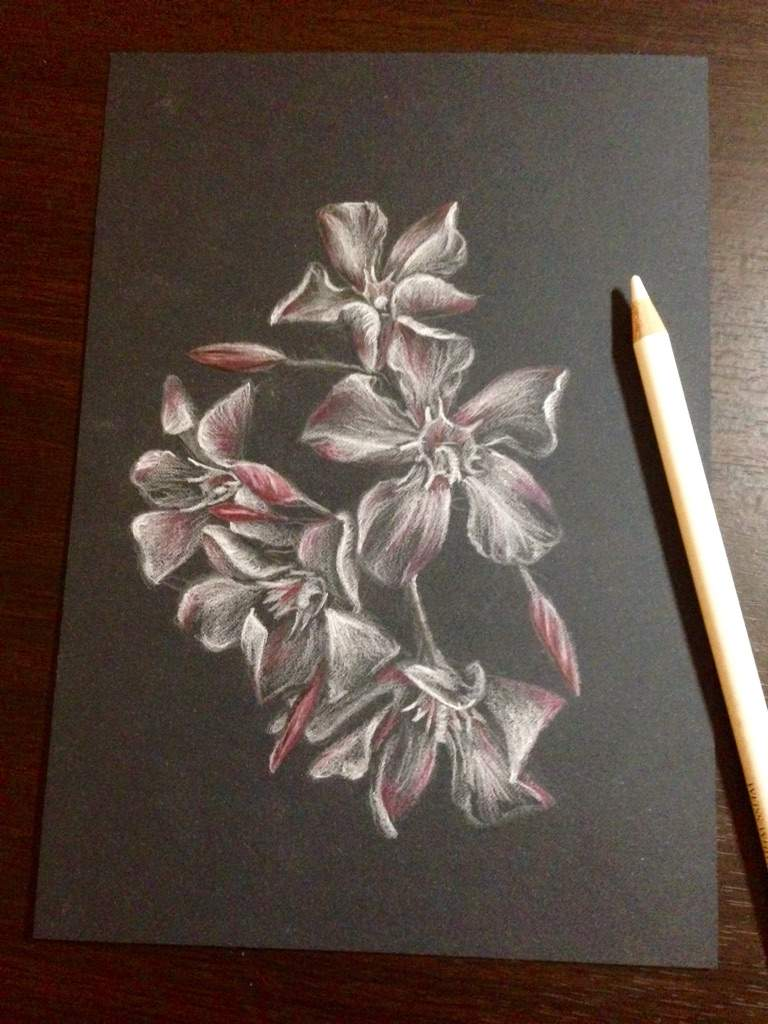 Flower Drawing On Black Paper Kubreforic
