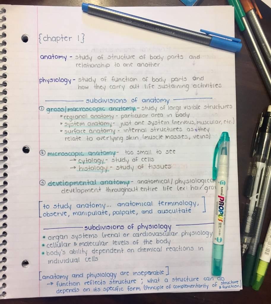Anatomy Notes Studying Amino Amino
