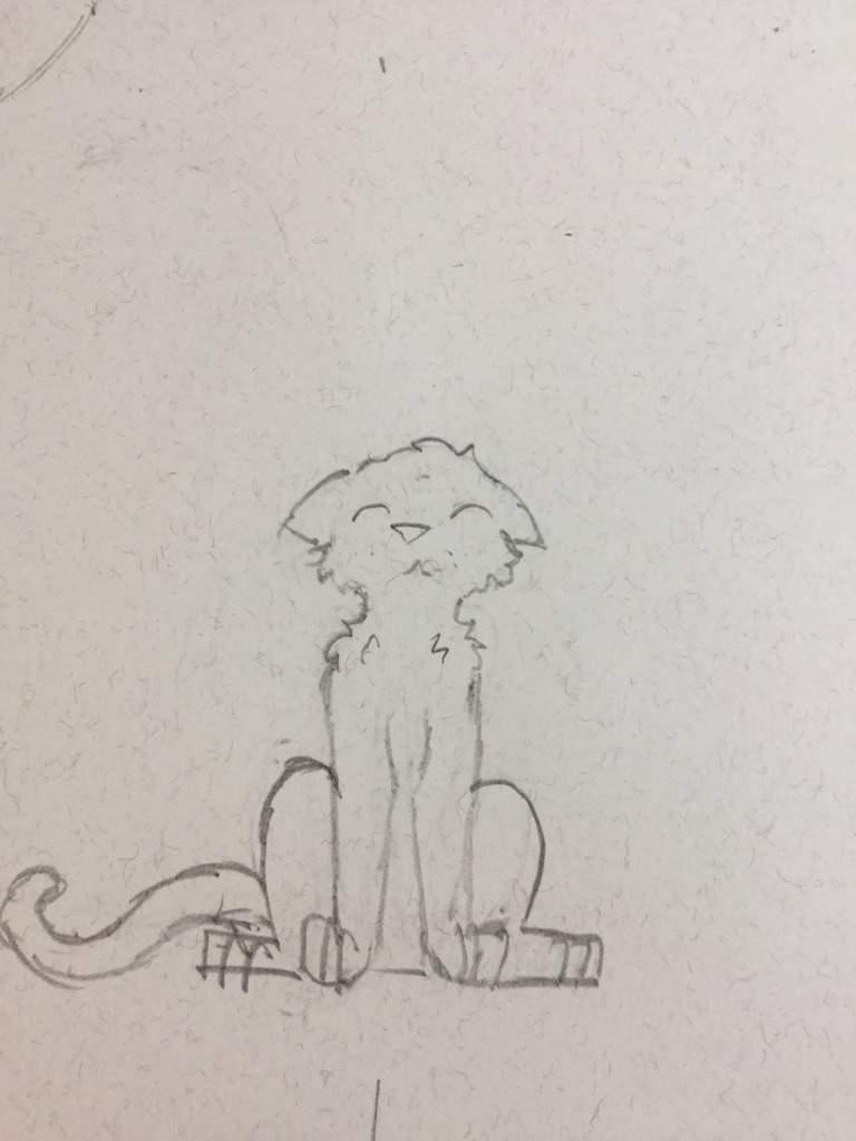 Dibujo Zarpa de Naranja  Los Gatos Guerreros Amino Amino