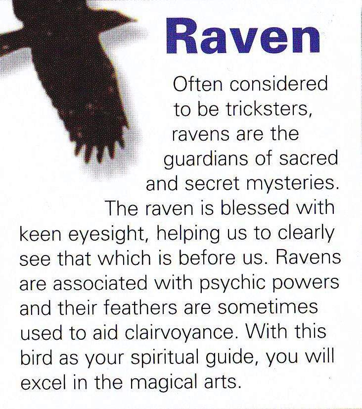Familiarsspirit Animals Raven Pagans Witches Amino