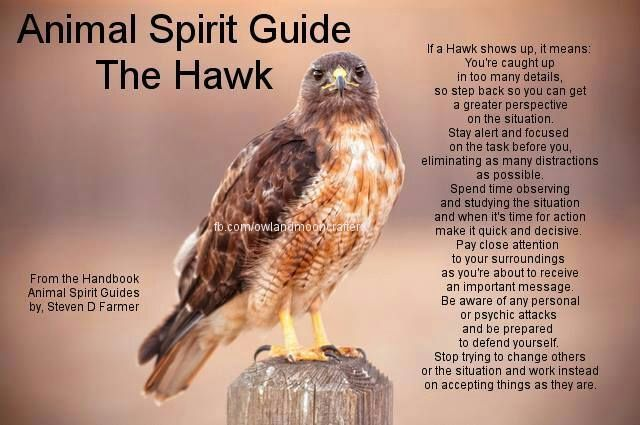 Familiarsspirit Animals Hawk Pagans Witches Amino