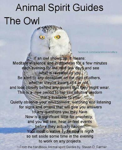 Familiarsspirit Animals Owl Pagans Witches Amino