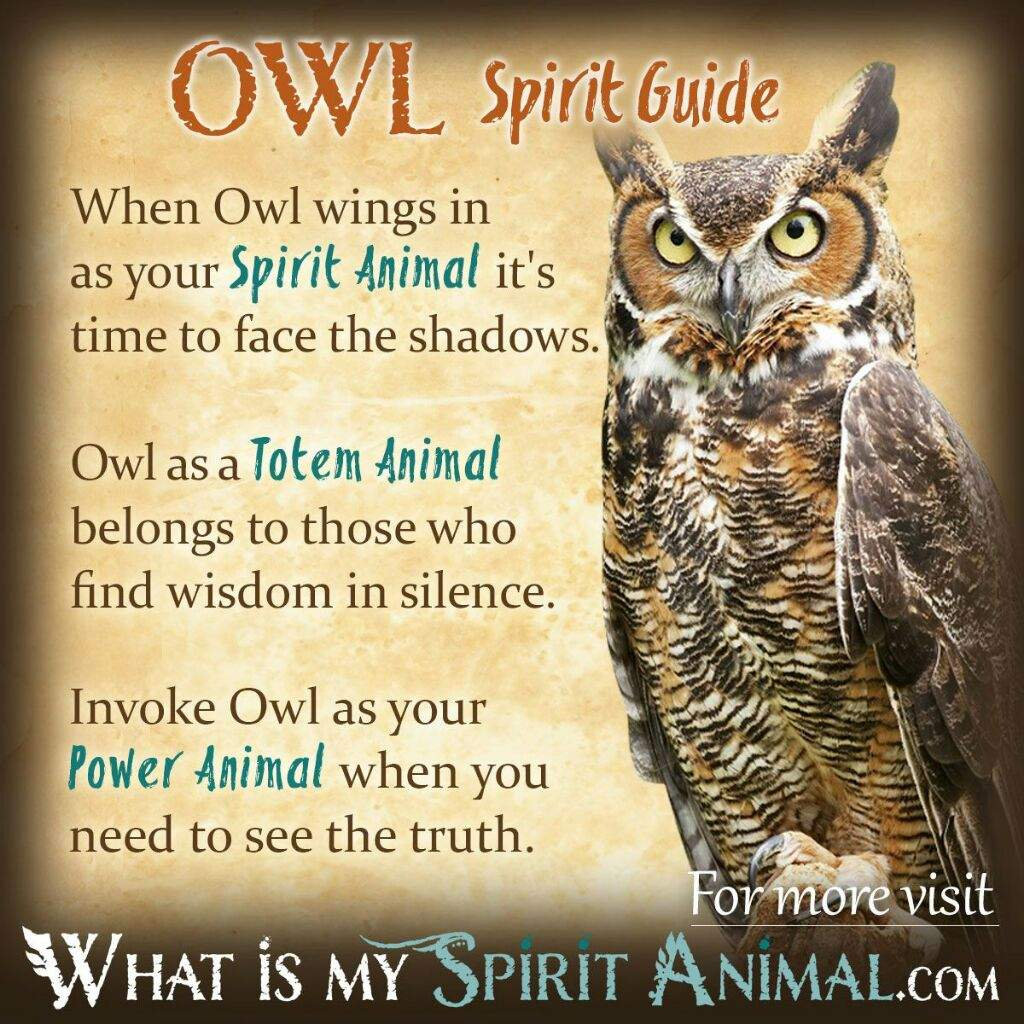 Familiarsspirit animals owl pagans witches amino below are some images i think youll find useful biocorpaavc
