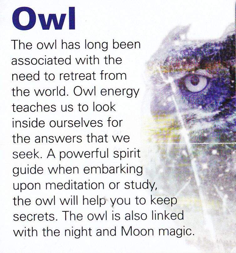 Familiarsspirit Animals Owl Pagans Witches Amino