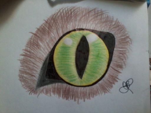 Como Desenhar Olho De Gato Realista Mundo Animal Amino