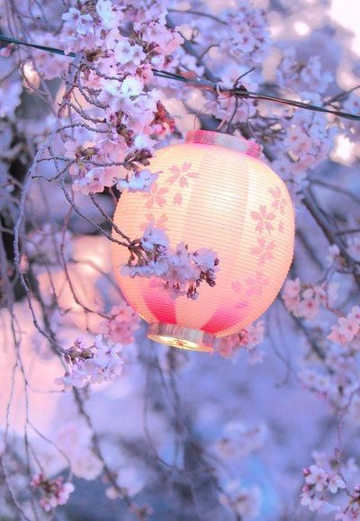 The Blossom Of Anese Cherry Also Known As Prunus Serrulata Is Technically Sakura Flower