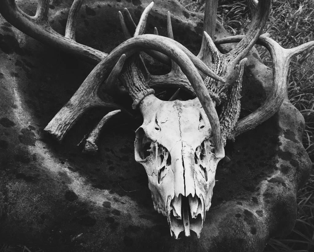 Deer symbolism pagans witches amino deer symbolism buycottarizona Images