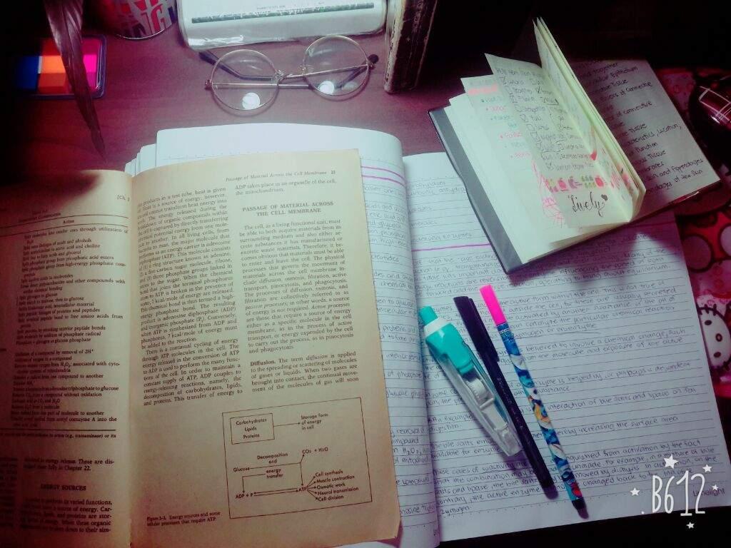 🌸💀STUDYING ANATOMY AND PHYSIOLOGY🏃🌸 | Studying Amino Amino