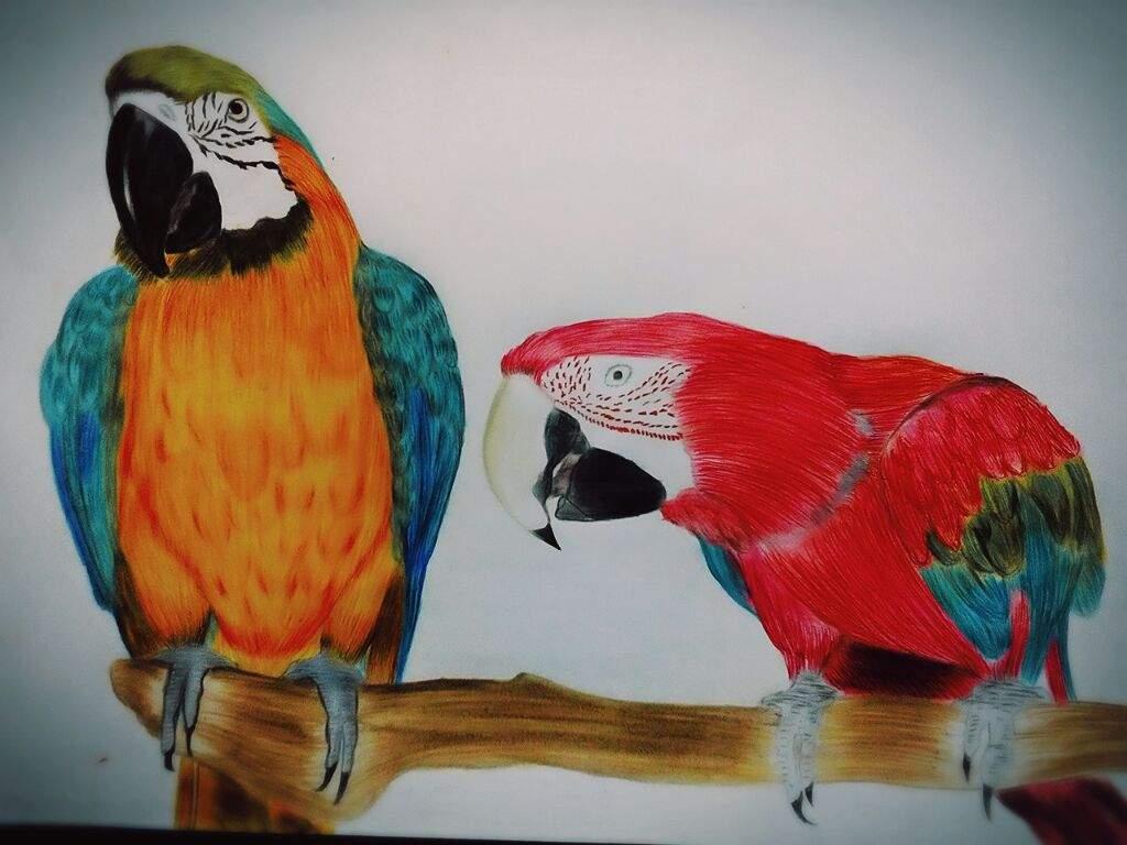 REALISMO: Los Guacamayos unas Sorprendentes Aves Exoticas ...