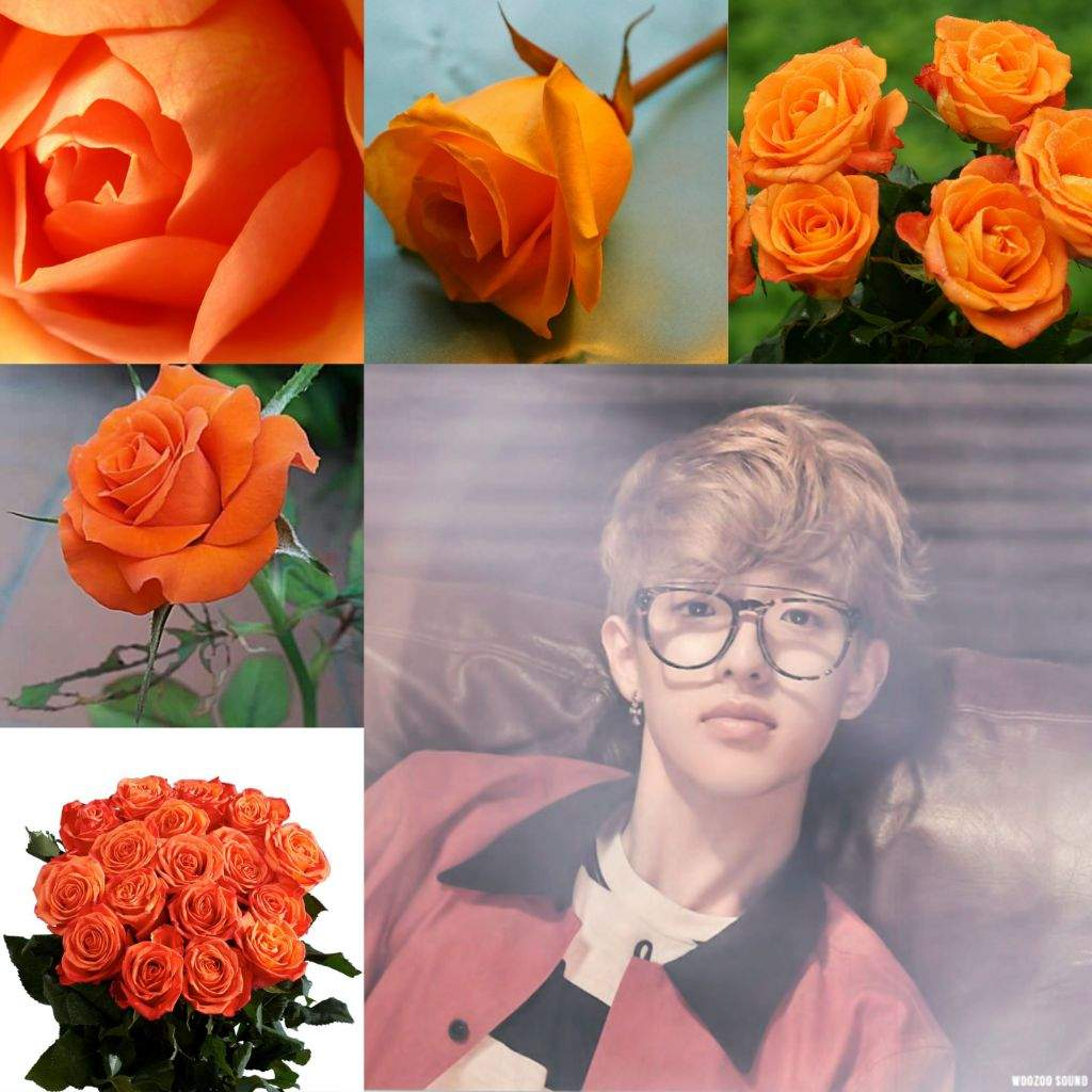 Day6 as challenge day6 as roses day6 amino orange roses symbolize energy it indicate enthusiasm desire and passion well thats how i see jae all the time his energetic side brings colours to the buycottarizona Choice Image