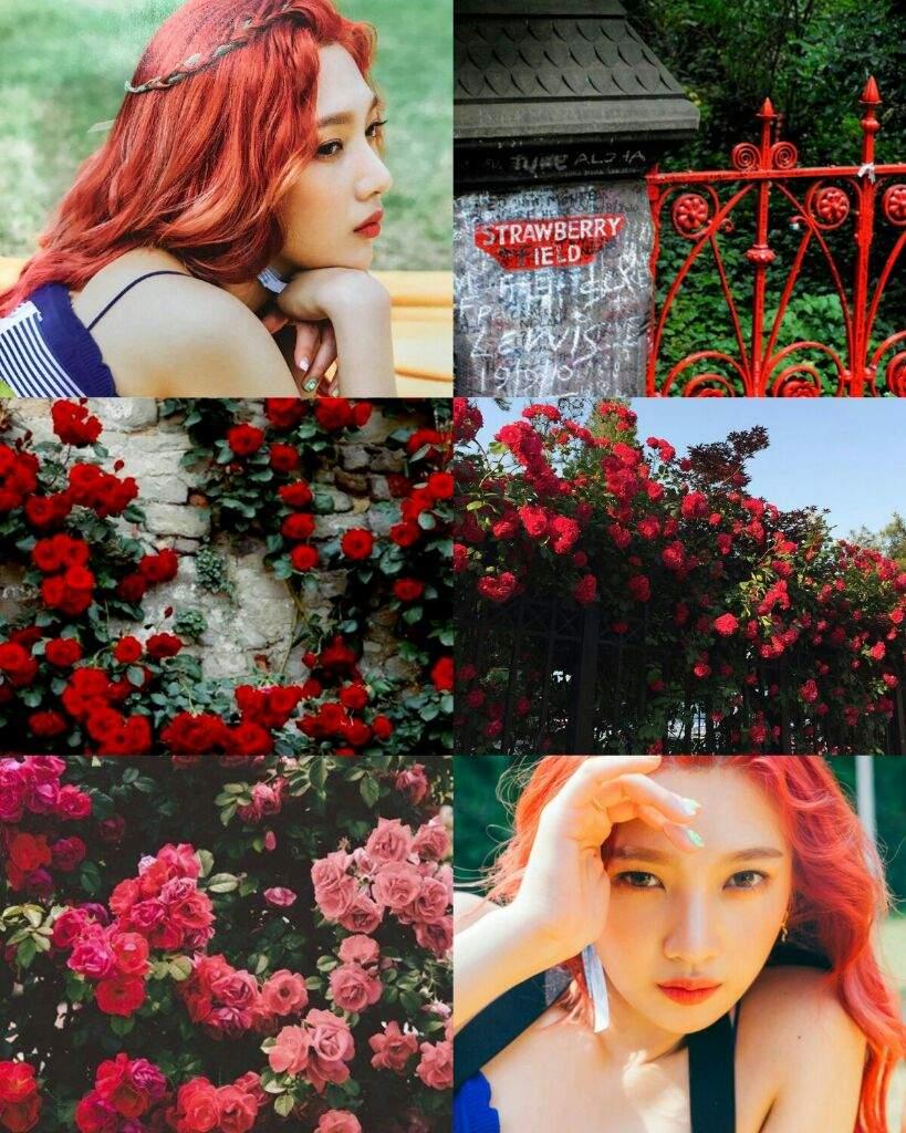Red Velvet A E S T H E T I C S 3 Red Velvet Amino