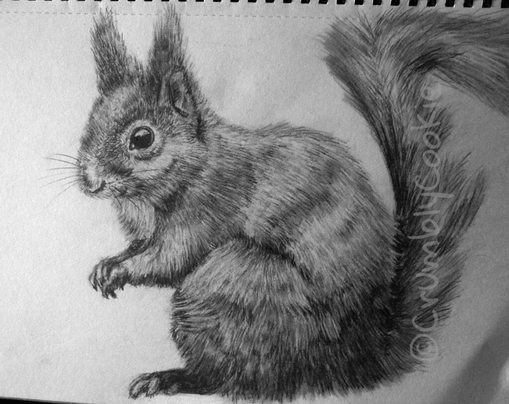 Squirrel pencil drawing 😃 art amino