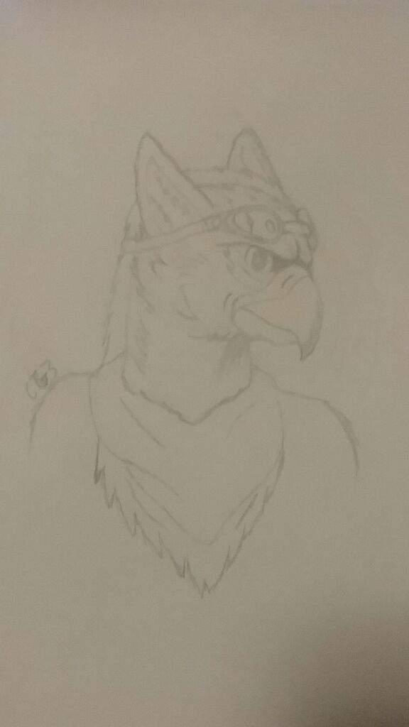 Anthro Head Sketch Griffins Amino