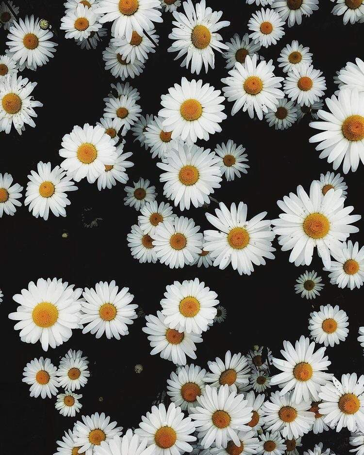 Daisies And Babys Breath