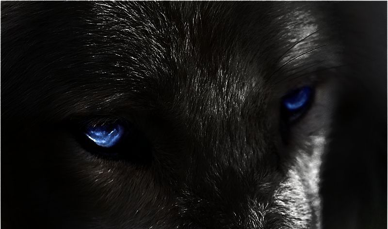 глаза волка у человека фото покупки