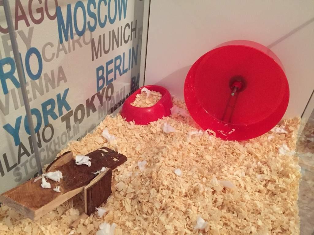 cage theme #2 | Hamsters! Amino