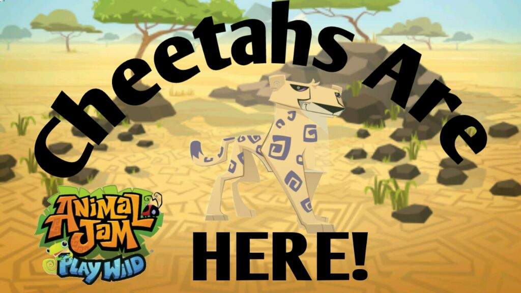Image of: Youtube Cheetahs Are Here Buy One Today For Only 150 Sapphires Dont Believe Me Download Animal Jam Play Wild And See It For Yourself Try Not Laughs Cheetahs Are Here Buy One Today For Only 150 Sapphires Dont