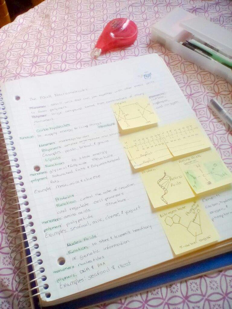 Review: Honors Algebra I & CPE Biology + Notes | School Amino