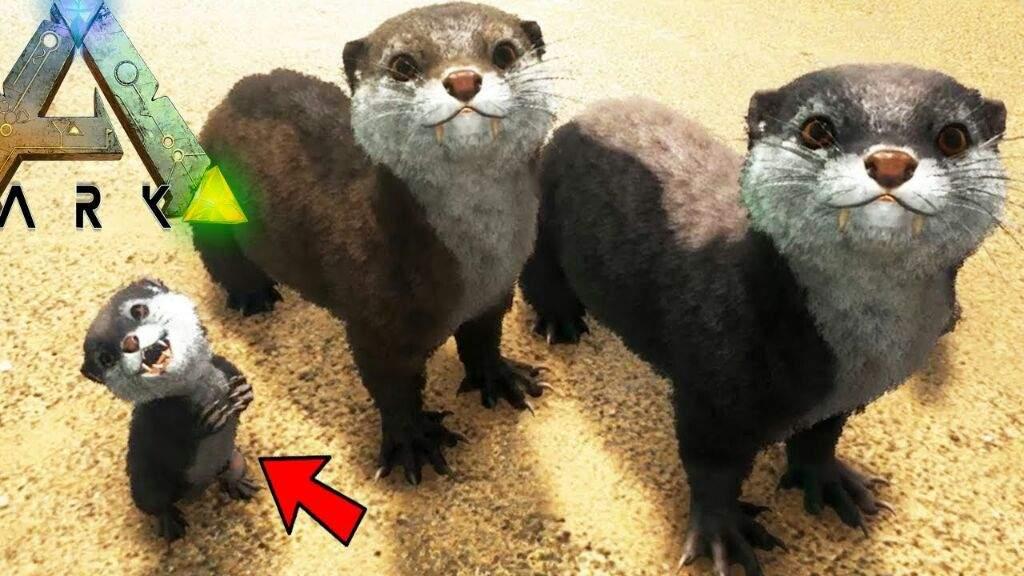 Ark Otters Ark Survival Evolved Amino Black pearls are a resource in ark: ark otters ark survival evolved amino