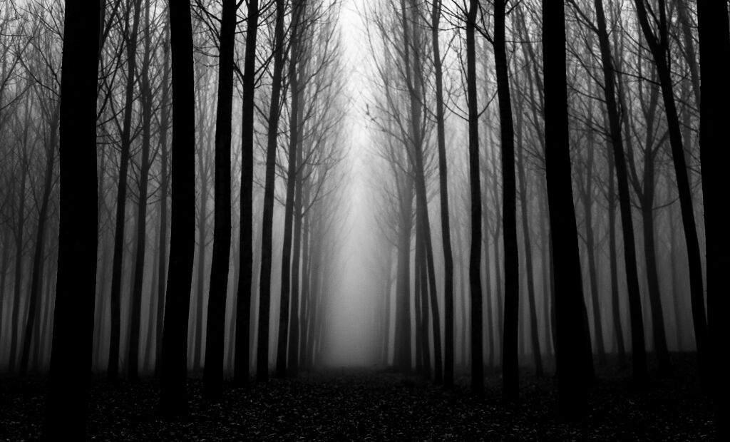 лес темный картинки