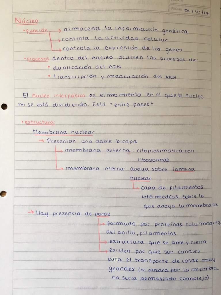 Biology Notes Studying Amino Amino