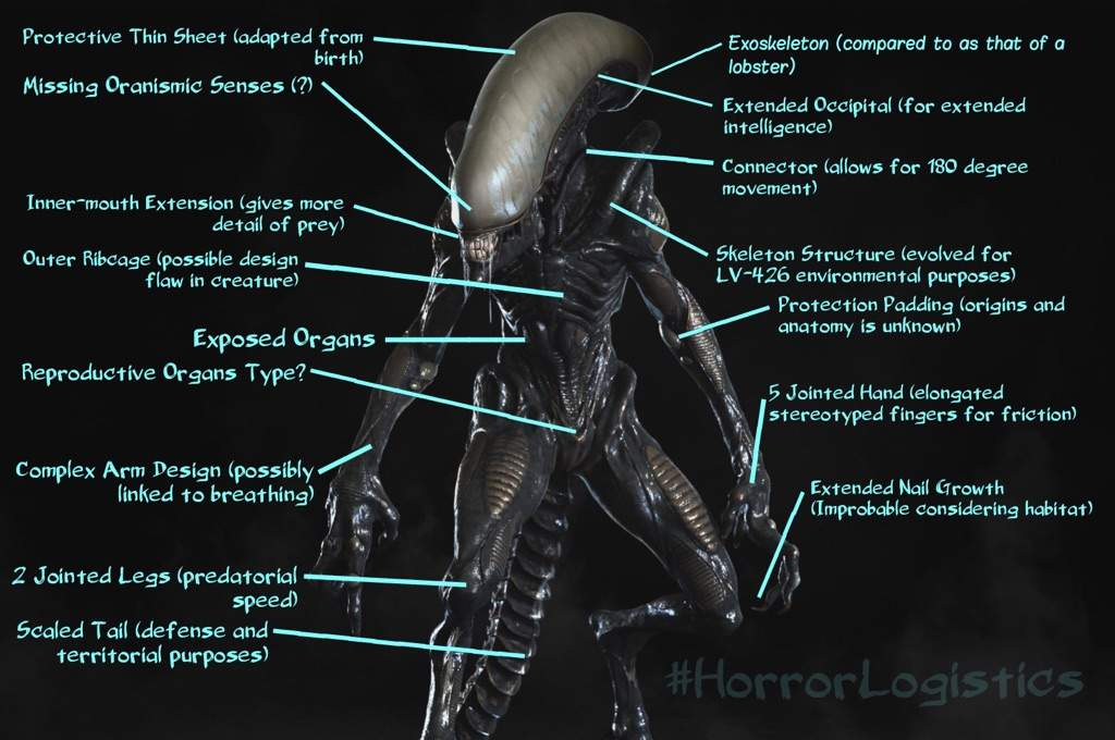 HorrorLogistics (Xenomorph Reproduction) | Horror Amino