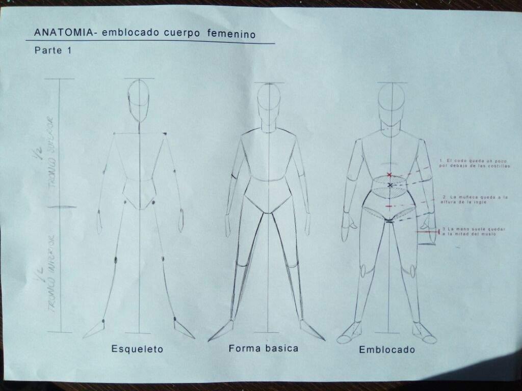 Básicos de anatomía | BeMart Amino