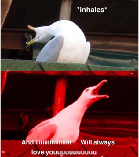 Inhaling Seagull   Memes Amino