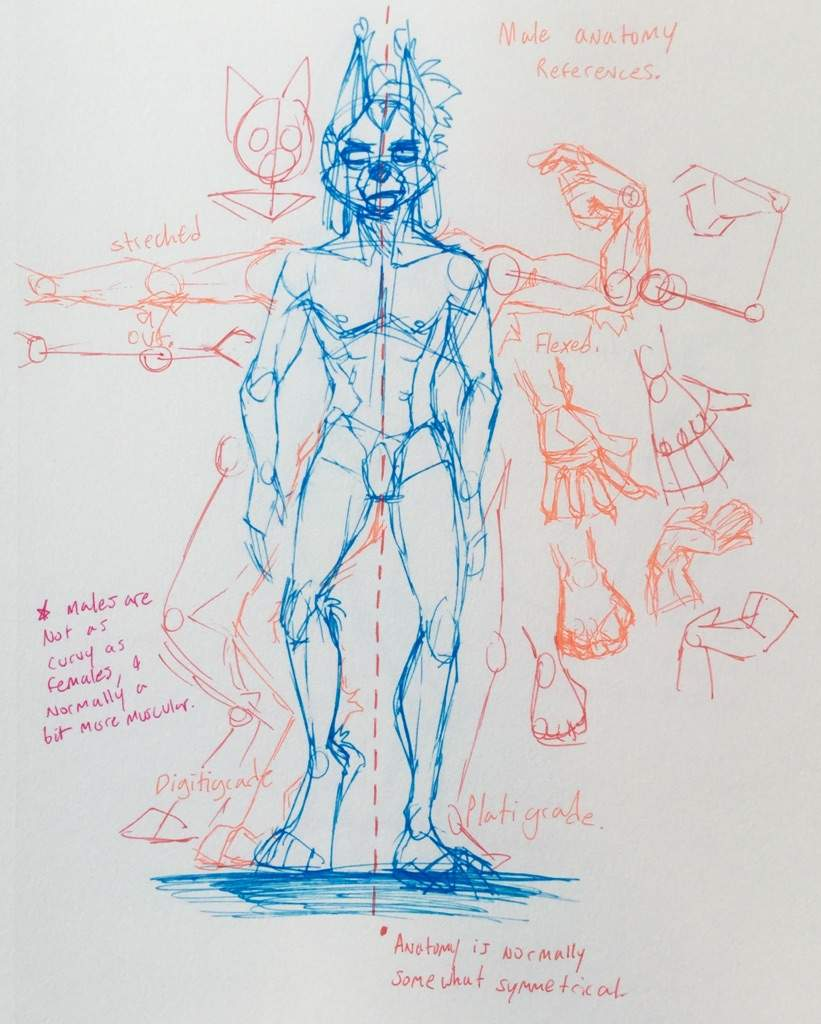 Anatomypose References Furry Amino