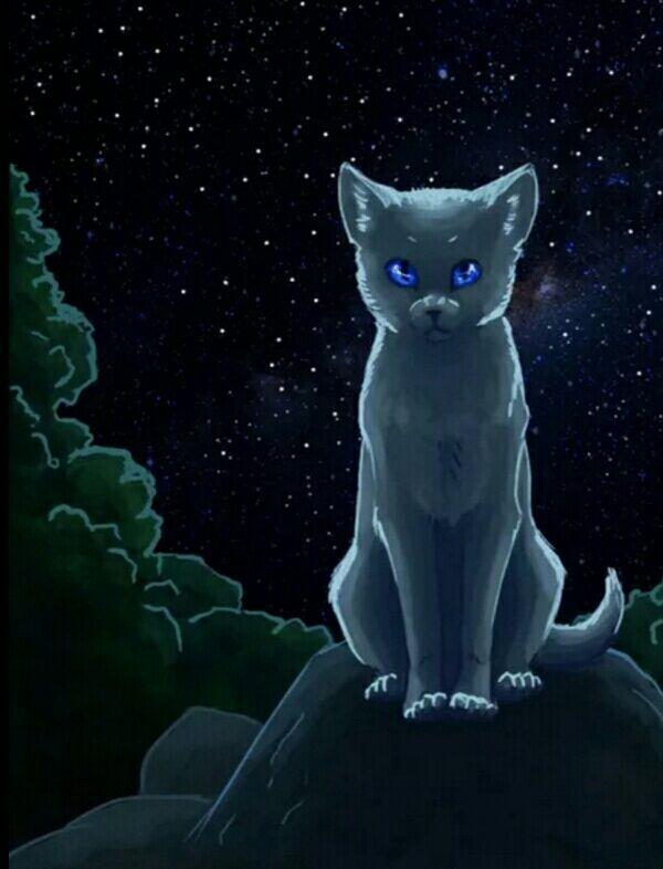 Коты воители картинки синяя звезда, девушку
