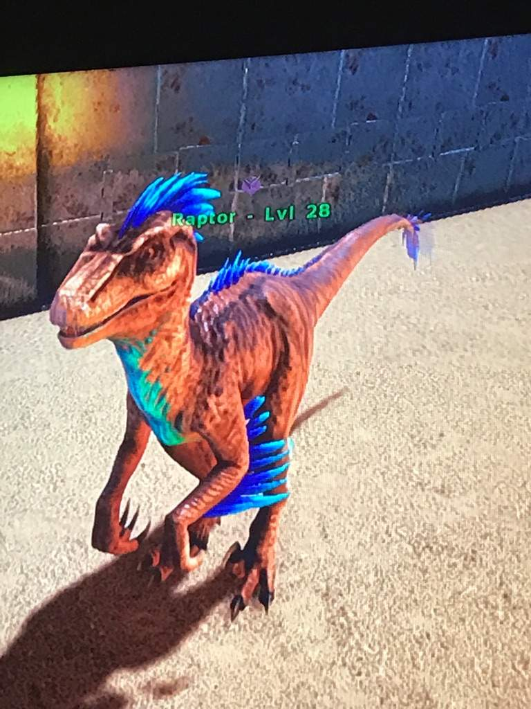 Well F The Bule Raptor Ark Survival Evolved Amino