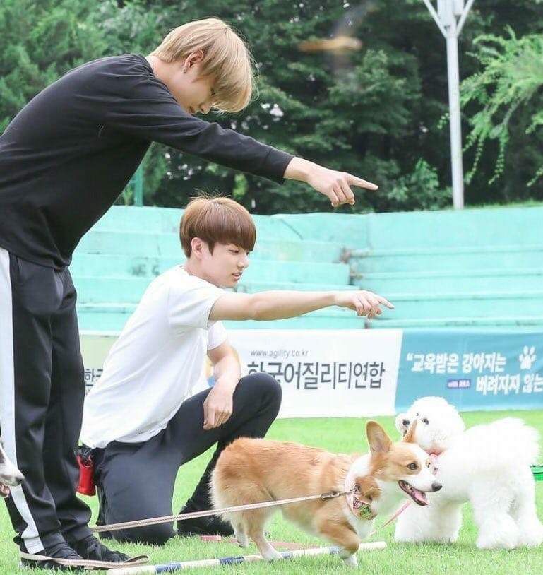 Taekook/vkook and their dogs 💗🐯💗🐰 (Run Bts Ep  23 10/18
