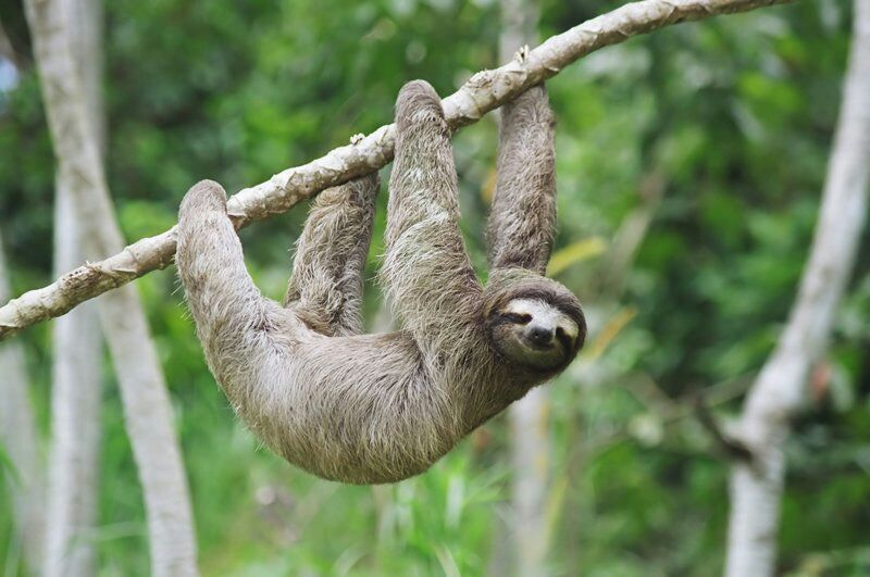 「The sloth」の画像検索結果