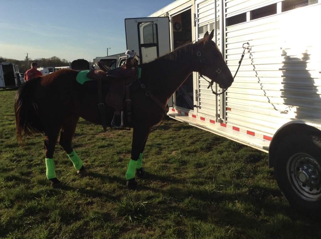 Poco Rockin Her Lime Green Tack Equestrian Amino