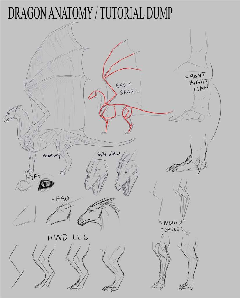 Dragon Anatomy / Tutorial Dump | Wings Of Fire Amino