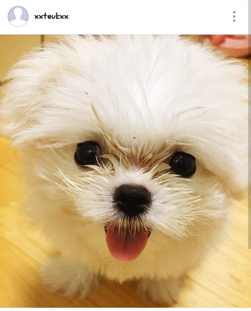 Download Fluff Ball Adorable Dog - 327f1462c40bac00a966e458b39e98d39a29e6ce_hq  Graphic_196880  .jpg