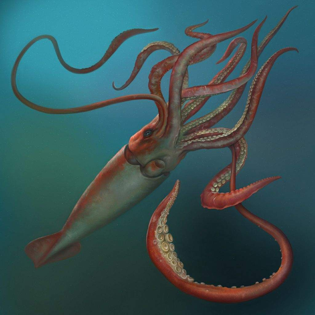So Is It Possible That The Giant Squid Behind Truth Of Kraken Legend In 1873 2 Men Claimed They Were Fishing On There Small Boat And