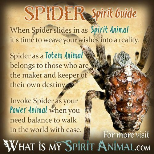 Spiders and their meanings [Spirit Animal Guide] | The