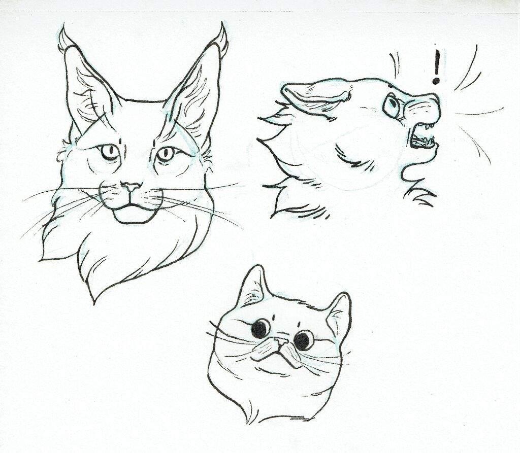 Tutorial De Dibujo Semirealista Caras Los Gatos Guerreros Amino