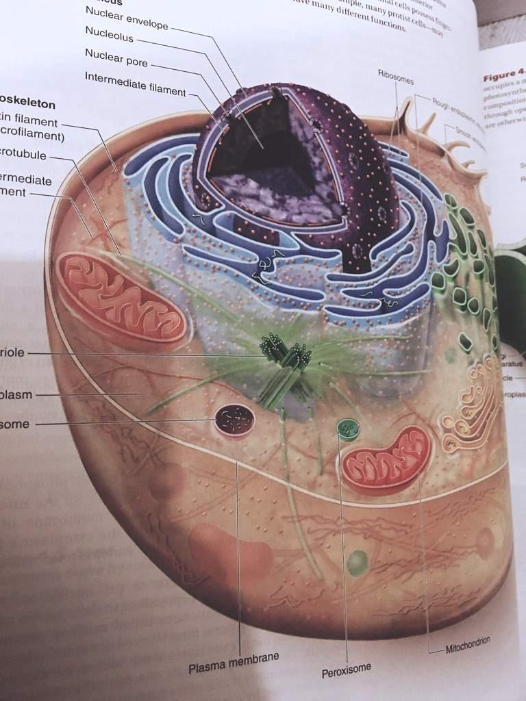 Raven Johnson Biology Book
