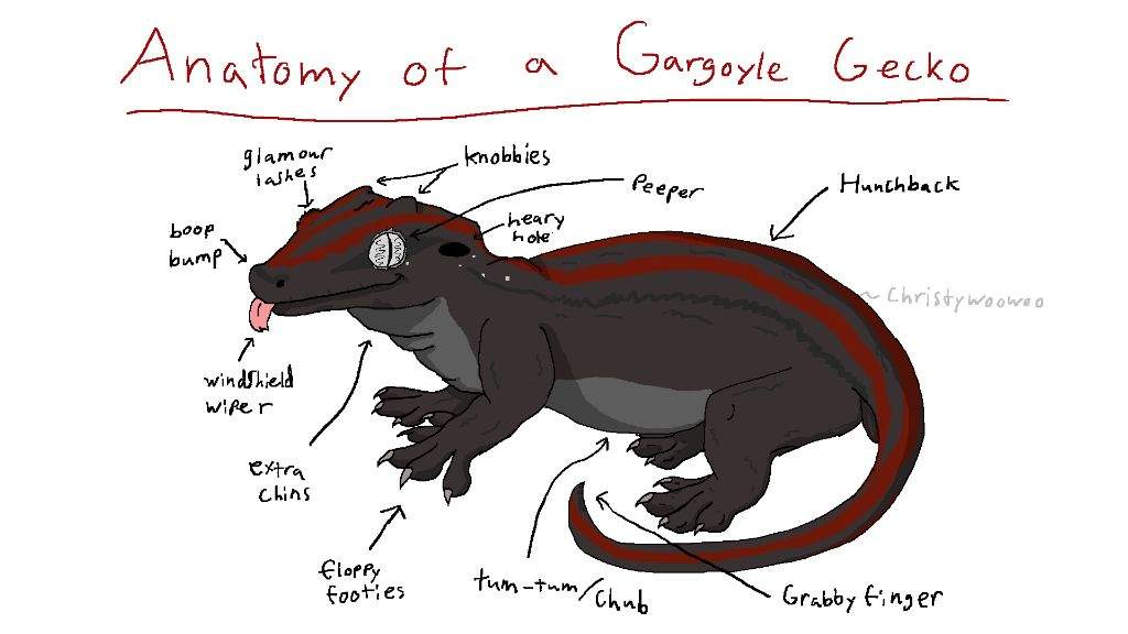 Gargoyle Gecko Anatomy | Reptiles Amino