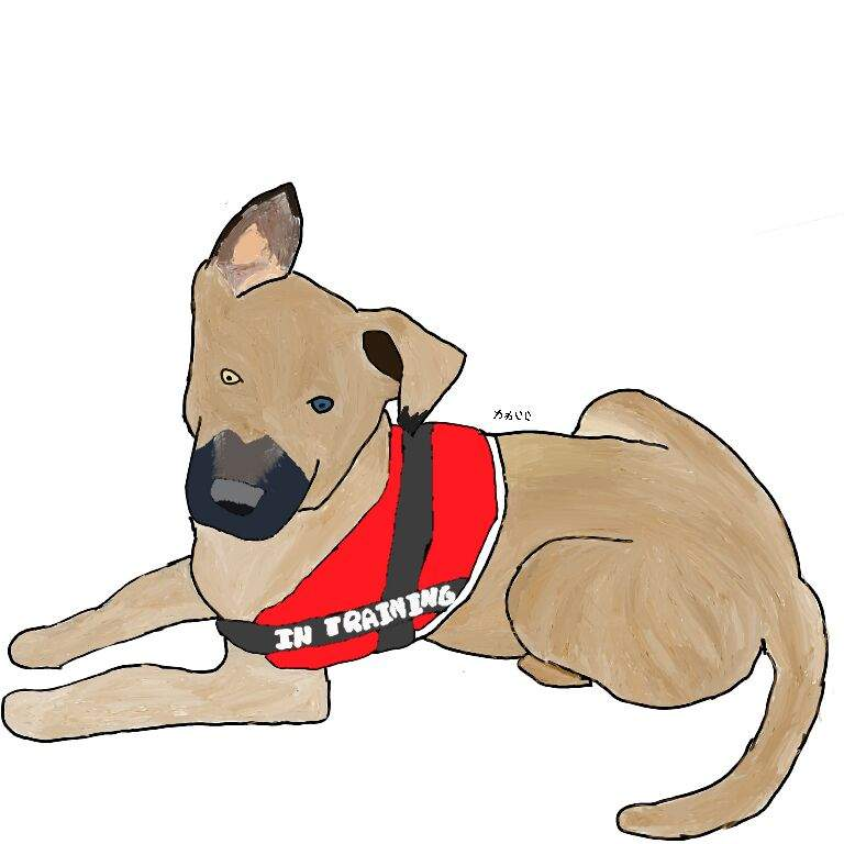 Drawing Service Dogs Amino