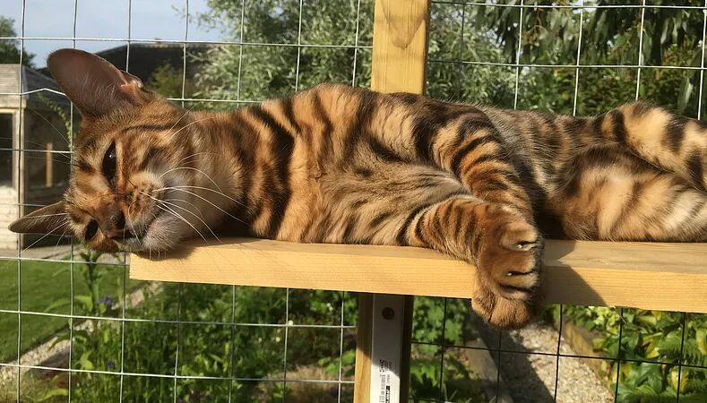 Spotted And Striped Cats | Cats Amino