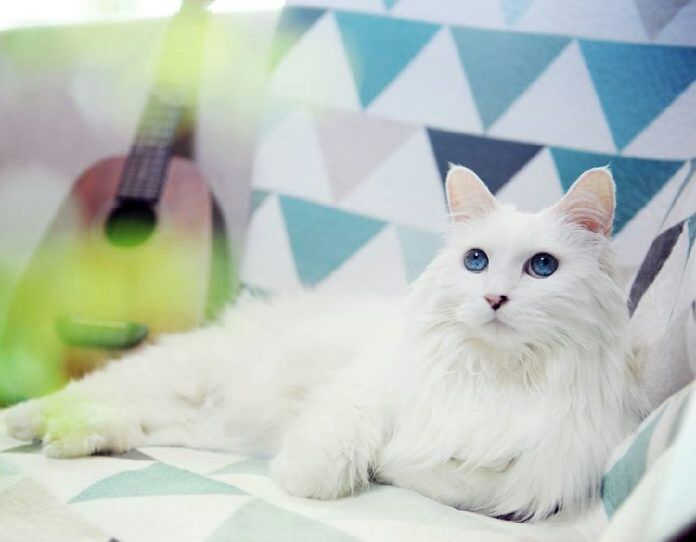 e1bc050451 💙Top 10 Cats With The Most Beautiful Eyes💜