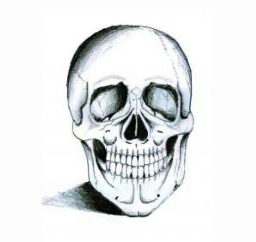 كيفيه رسم جمجمة مخيفه Paranormal ᴀʀᴀʙɪᴄ Amino