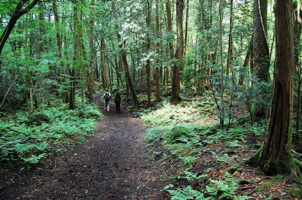 замер лес в японии аокигахара фото общем, есть печатные